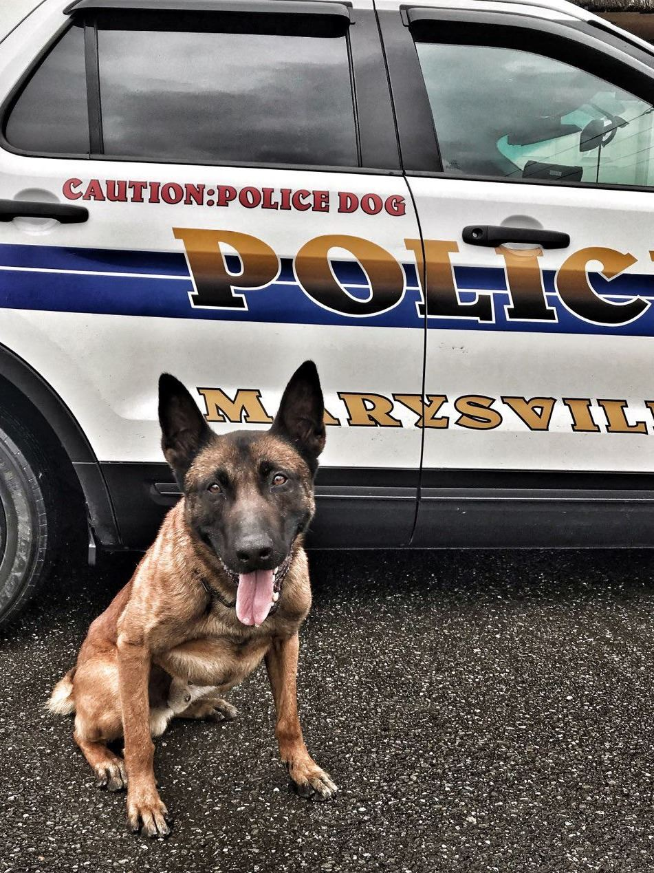 K9 Steele sits in front of a patrol car